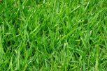 Szórható fű, statikus, nem statikus