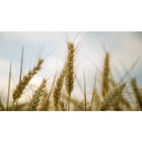 Mezőgazdasági növények